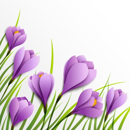 Crocuses  Paper purple flowers on white background Vector