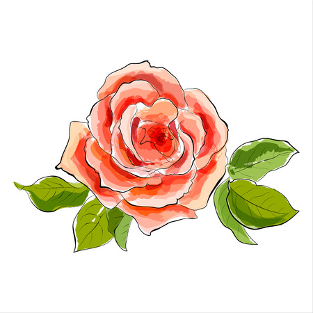 to adore: Beautiful red rose  Stylized watercolor illustration  Vector Illustration