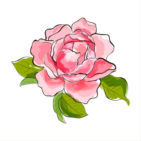 Beautiful pink rose  Stylized watercolor illustration  Vector