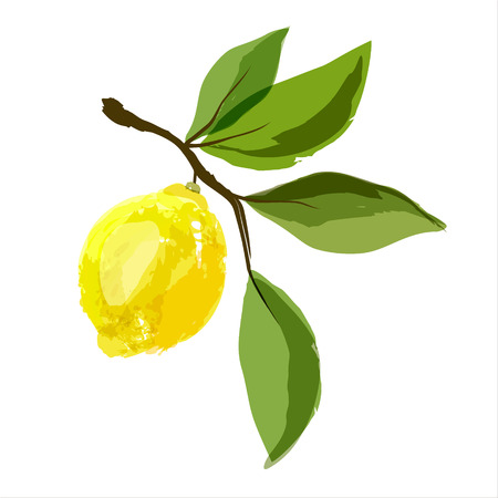 Lemon on a branch with leaves. Watercolor. Vector