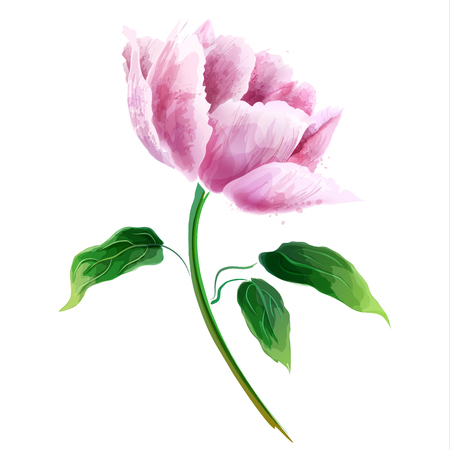 Pink peony flower. Flowering branch isolated on white background. Vector collection