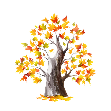 Autumn maple tree isolated on a white background. Watercolor vector