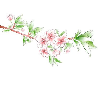 Cherry branch blossom on white background. Pink flowers. Spring design. Vector illustration