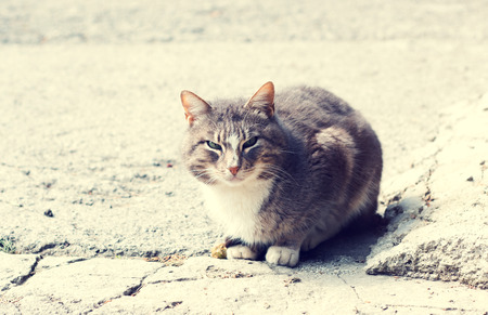 pedigreed: Home pedigreed cat sitting on the ground and looks. Toned photo Stock Photo