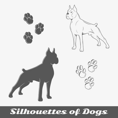 perro boxer: Siluetas de perros de raza pura. Objetos aislados. Ilustración vectorial