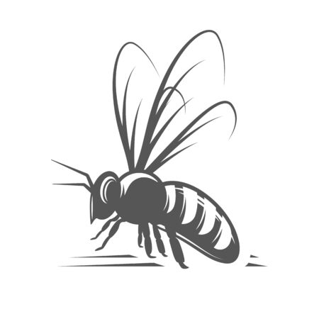 Bee isolated on white background. Vector illustration