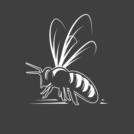 Bee isolated on black background. Vector illustration
