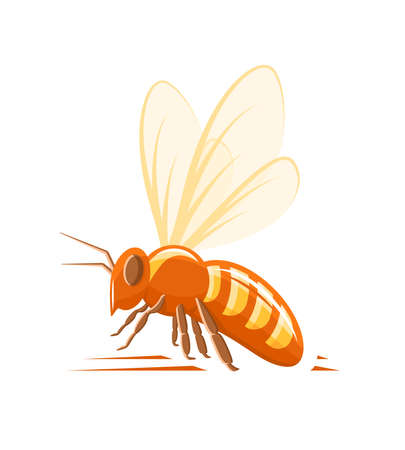 Bee, side view isolated on white background. Design element for honey concept. Vector illustration Vecteurs