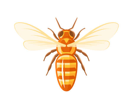 Bee, top view isolated on white background. Design element for honey concept. Vector illustration Illusztráció