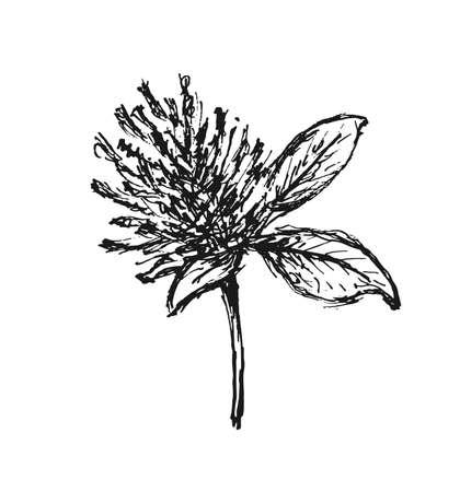 Sketch flower isolated on white background. Design element. Vector illustration Illusztráció