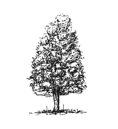 Sketch tree isolated on white background. Design element. Vector illustration