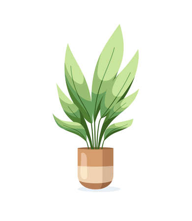 Home plant in flower pot isolated on white background in flat style. Vector illustration
