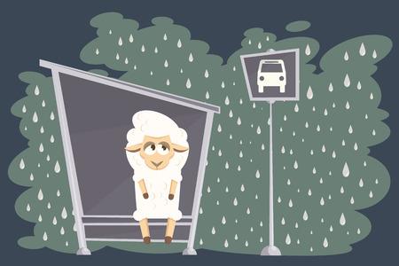 ovejita bebe: Cordero del beb� que espera el autob�s en una calle lluviosa.