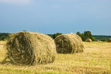 rick: Hay stacks on the field | Summer rural landscape