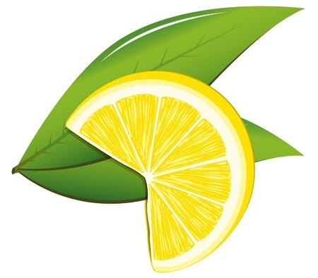 Lemon and leaves Stock Vector - 13015992