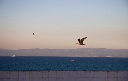 Sea-gulls Stock Photo - 13051731