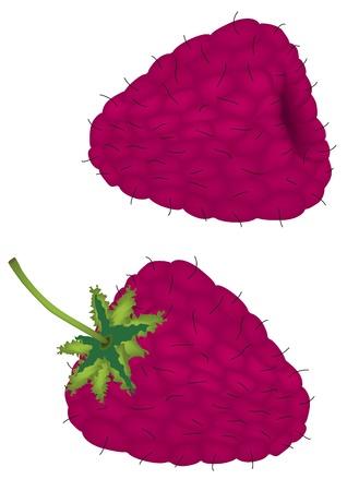 Raspberry Stock Vector - 13250281