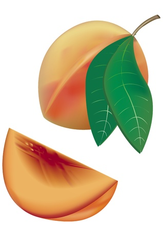 Peaches Stock Vector - 13250280