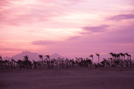 mirage: Sunset in the desert - Palm Silhouettes Stock Photo
