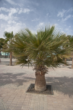 African Palm trees at bright summer day Stock Photo - 14222332