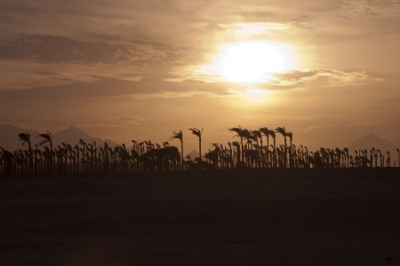 Sunset in the desert - Palm Silhouettes Stock Photo - 14323749