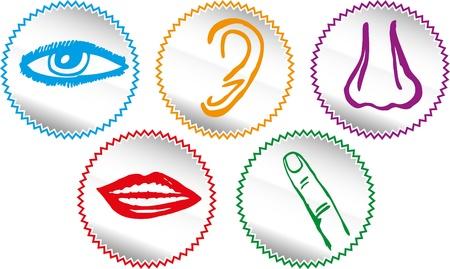 Cinque sensi, set di icone - illustrazione