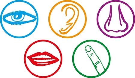 partes del cuerpo humano: Cinco sentidos icon set - Ilustraci�n