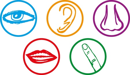 Five senses icon set - Illustration Vector