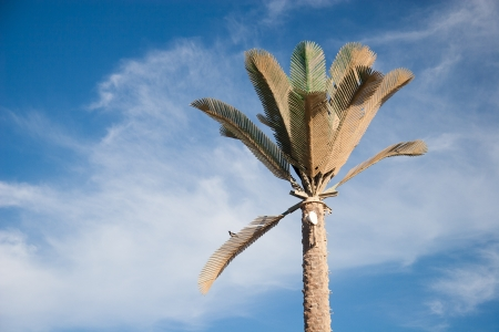 Green beautiful palm tree at blue sky photo