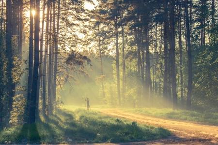 houtsoorten: Avond bos met zon en volume licht Stockfoto