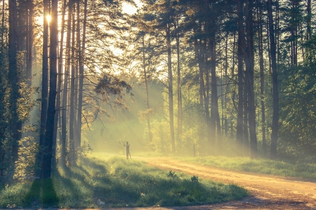 Evening forest with sun and volume light Stock Photo - 20852775