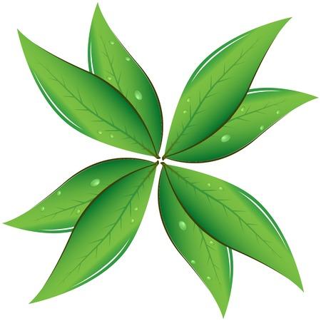tea plantation: Tea leaves Vector illustration