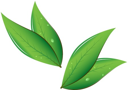 green and black: Tea leaves Vector illustration