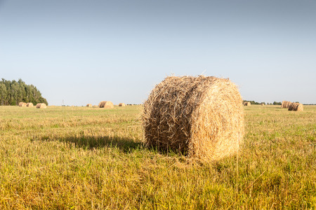 Haystacks in the field photo