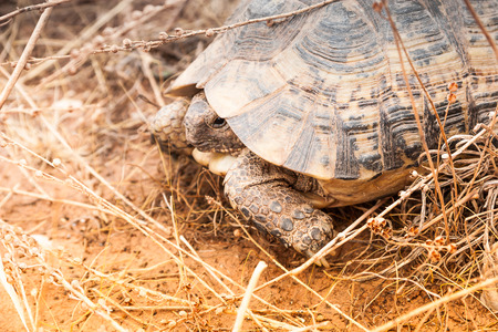 land turtle: Turtle on the ground