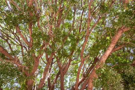 trunk  tree: Tronco de �rbol en tiempo de verano Foto de archivo