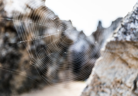 spiders web: A Big Spiders Web among the rocks