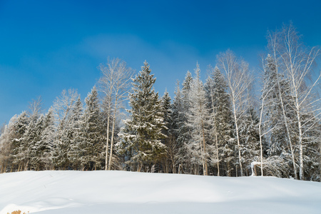 January forest covered with snow at morning Stock Photo
