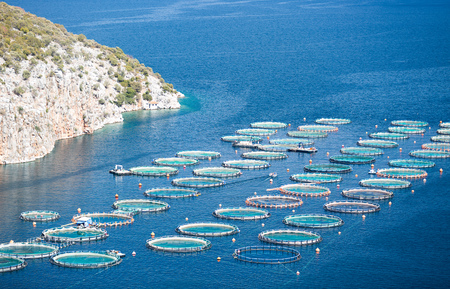 commercial fisheries: Fish farm in the sea