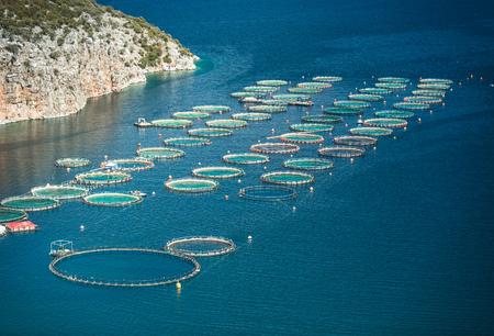 salmon fishery: Fish farm in the sea