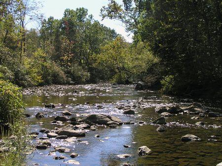 맑은 얕은 강이 흐르는 숲 스톡 콘텐츠