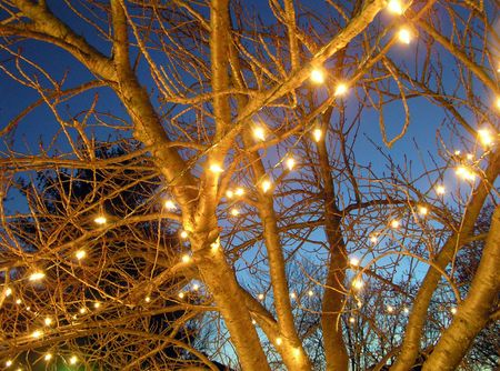 Closeup of cherry tree with Christmas lights Imagens