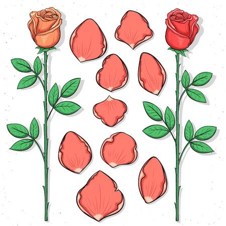 pink flower: Isolated rose and petals handmade in sketch style. Sketch of flower. Roses petals for design cards and posters, collages and presentations, web design, background. Retro design. Vintage style.