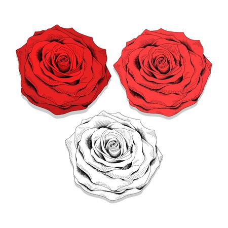 dessin fleur: Set croquis r�aliste de roses. Roses pour cr�er le design. fleurs �l�gantes. Fleurs � la main design. Les couleurs rouges et monochromes. ensemble brillant de fleurs dans le style d'esquisse.