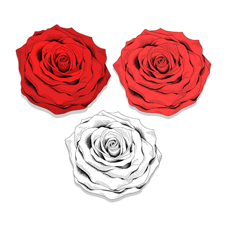 draw a sketch: Set realistic sketch of roses. Roses to create the design. Elegant flowers . Flowers handmade design. Red and monochrome colors . Bright set of flowers in sketch style . Illustration