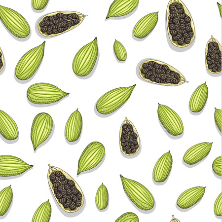Seamless pattern with sketch cardamom . Painted cardamom . Pattern tiles with cardamom . Culinary herbs . The fruits of the plant . Seasoning for food . Eastern cuisine. Ilustracja