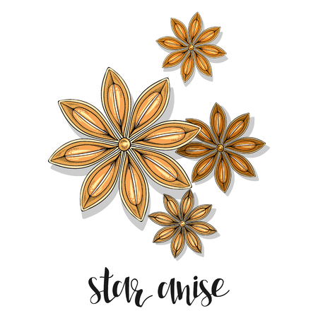 star anise: Star anise isolated object sketch . Spice for food . Culinary seasoning . Spices for cooking. The plant for culinary dishes . Seasoning for food . Spices for cooking Illustration