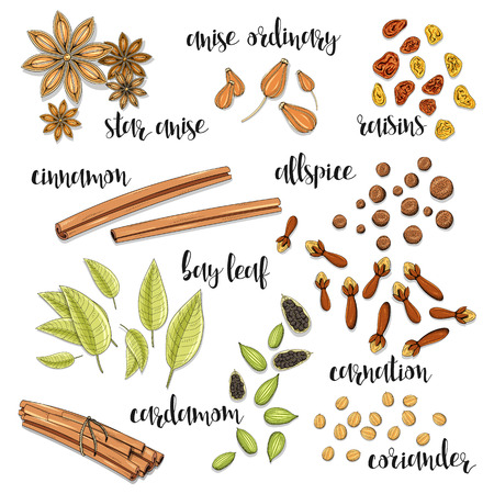 raisin: Set of spices in the sketch . Anise and cardamom, cinnamon and allspice , cloves and raisins , coriander and bay leaf . Seasoning for dishes. Cooking spices. Eastern cuisine. European cuisine