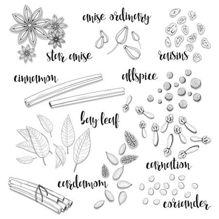 Set of spices in the sketch . Anise and cardamom, cinnamon and allspice , cloves and raisins , coriander and bay leaf . Seasoning for dishes. Cooking spices. Eastern cuisine. European cuisine