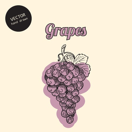 consist: Vector grapes. Background consist of grapes. Sketch art style.